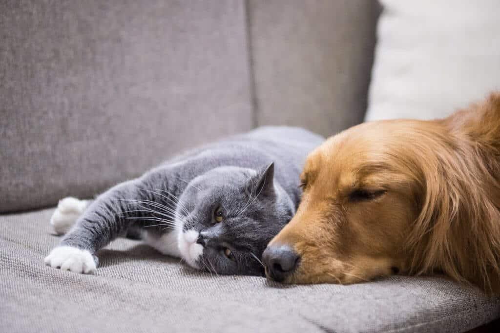 cane gatto su divano rivestimenti per animali tessuti per cani e gatti