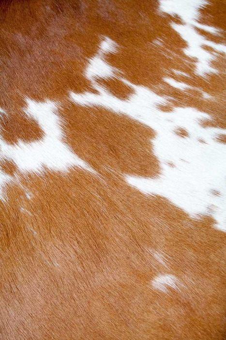 chaise longue cassina cavallino corbusier marrone e bianca particolare trama pelo