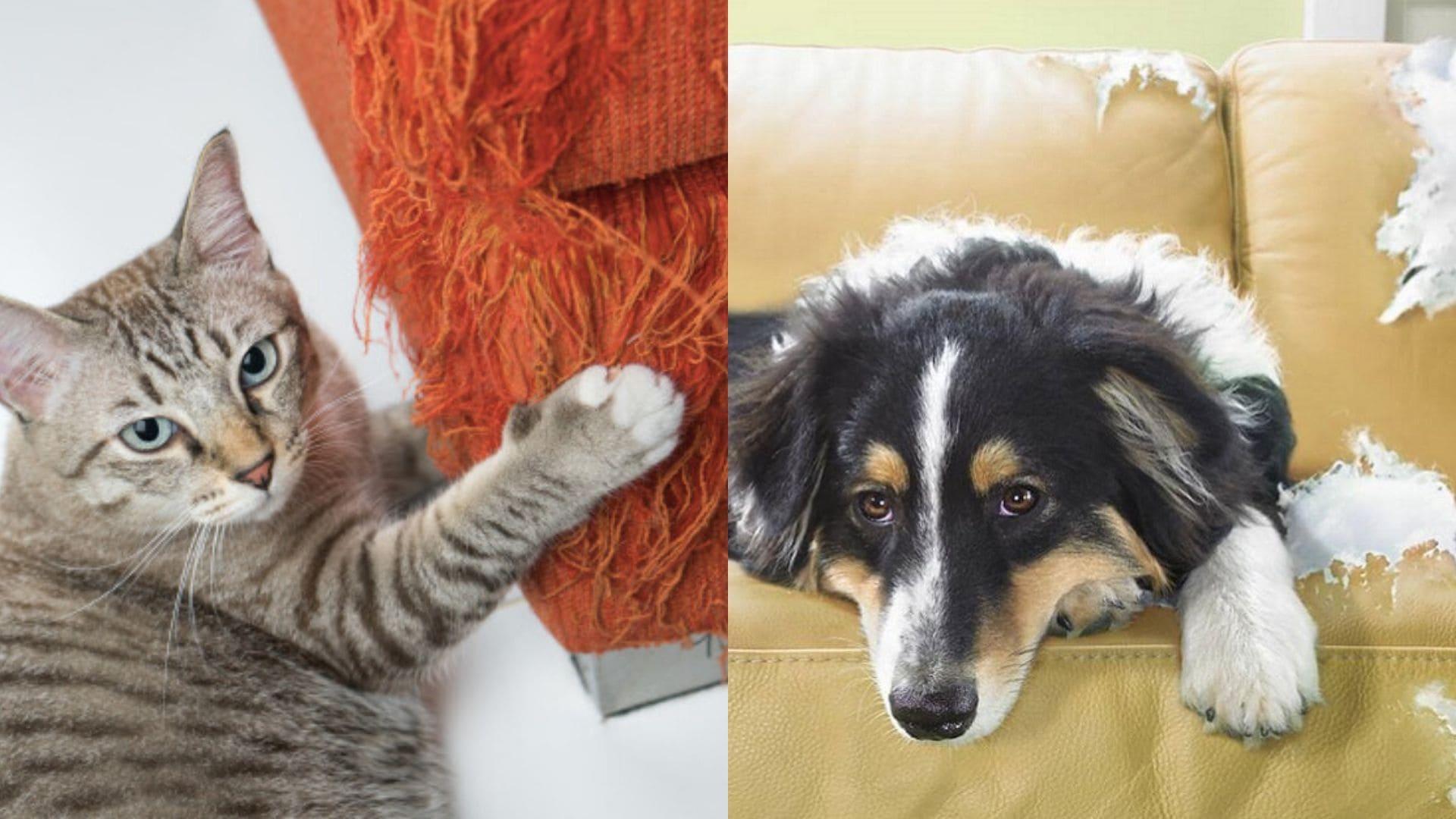 gatto e cane divano rovinato